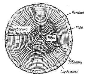 Строение и состав древесины. Пороки древесины